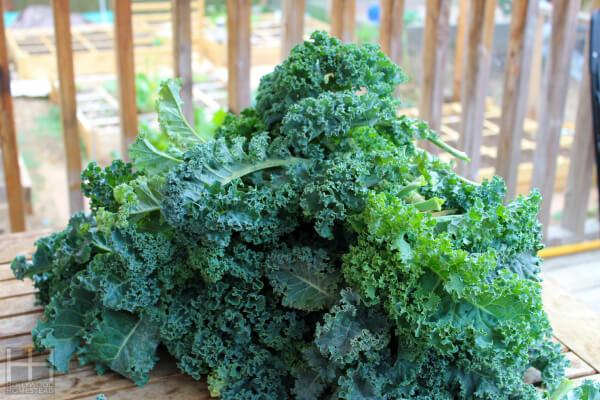 Healthy kale 1 WM