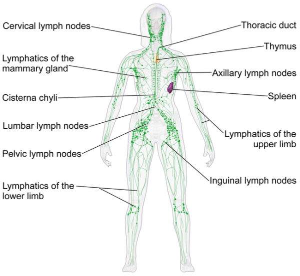 lymphatic system dry brushing
