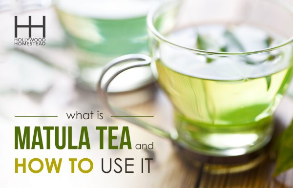 What Is Matula Tea and How to Use It